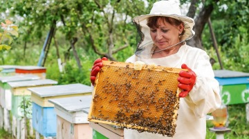 Beekeeper with honeycomb in her hands